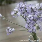 IMG_4558_Lavender2