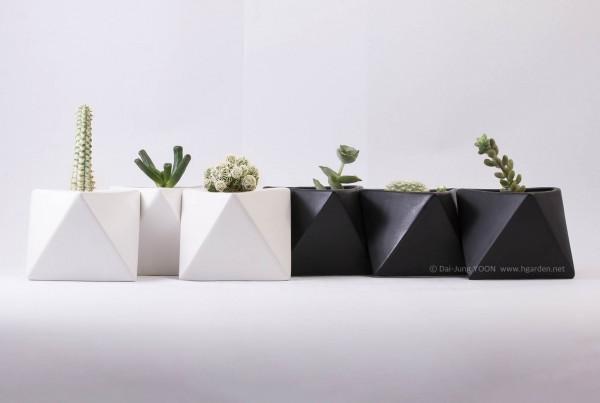 다육식물_Succulent_plant