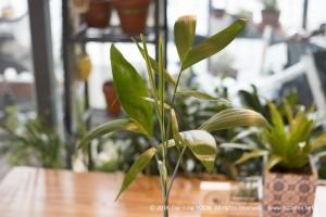 대나무 야자_bamboo_palm