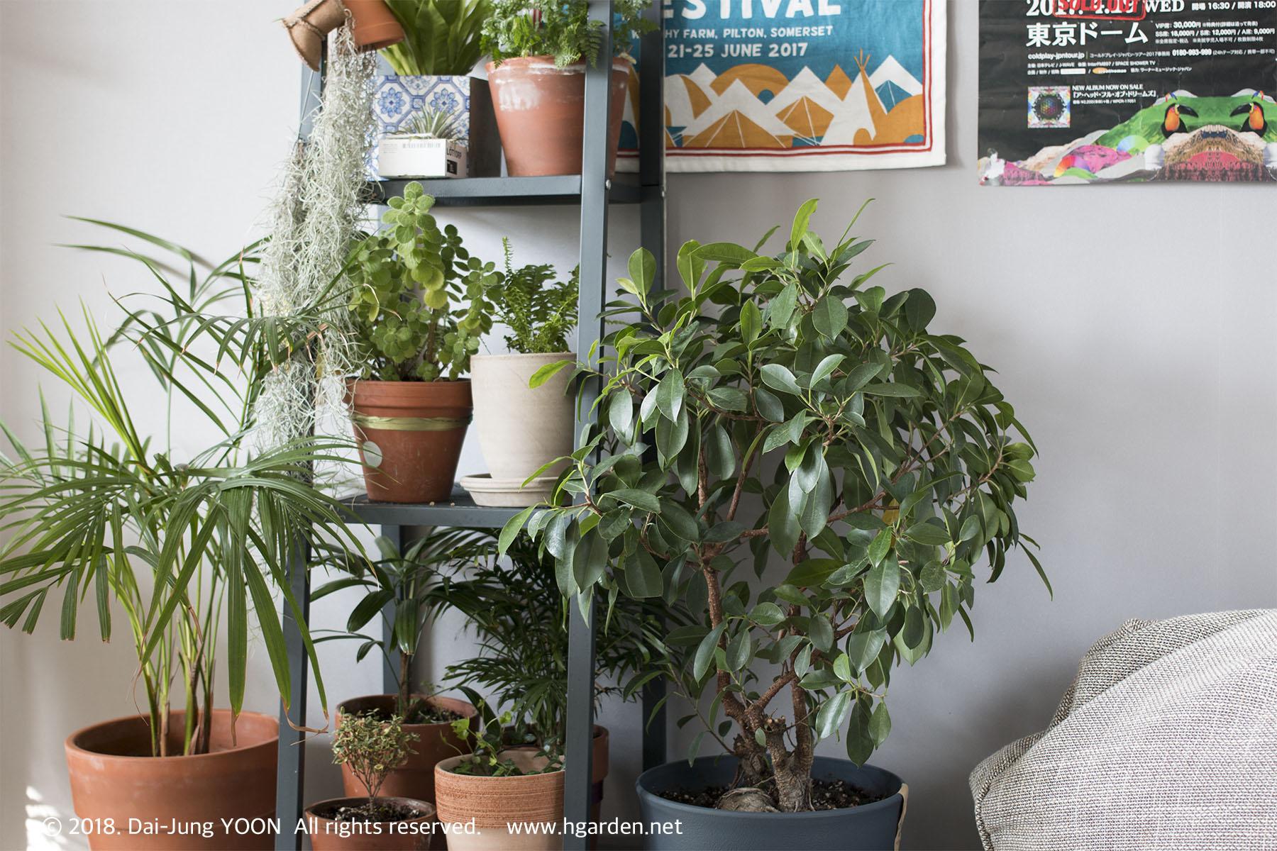 실내식물 순위