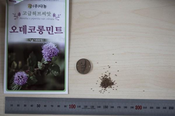 seed-02