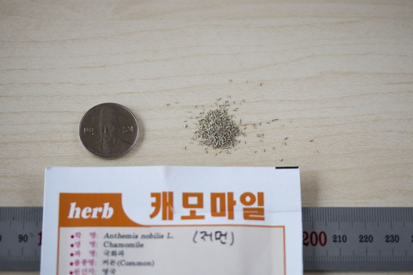 seed-06
