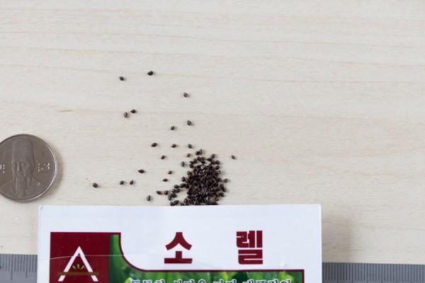seed-11