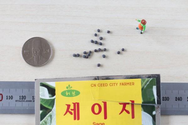 seed-15