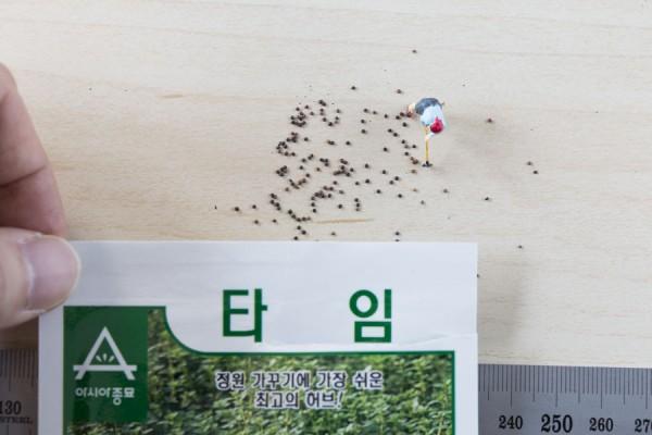 seed-19