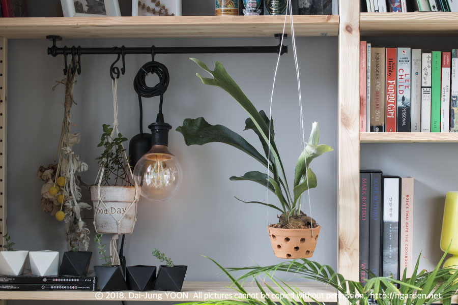 미세먼지 줄여주는 실내 식물