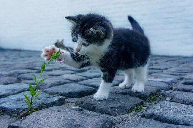 고양이에게 해로운 독성이 있는 실내 식물과 안전한 식물